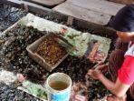 Menjernihkan Kembali Teluk Jakarta dengan Kerang Hijau
