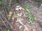 Petugas Belum Berhasil Indentifikasi Kerangka yang Ditemukan di Lereng Merapi