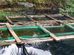 kolam-ikan-salah-satu-warga-desa-banua-lawas-diduga-tercemar_20180926_120409.jpg
