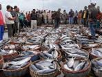 komisi-iv-dukung-malut-jadi-lumbung-ikan-nasional_20160804_095042.jpg