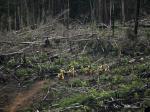 kondisi-hutan-gundul-di-Riau.jpg