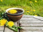kopi-akar-dandelion-yang-rendah-kafein.jpg