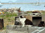 Pulau Ini Punya Populasi Kucing yang Lebih Banyak dari Manusia