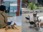 kucing-uns-meaow.jpg