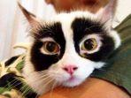 kucing-yang-memiliki-motif-bulu-unik-dan-lucu_20180120_163234.jpg