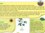 kunci-jawaban-tema-3-kelas-4-sd-halaman-18-19-21-22-23-tematik-subtema-1-bola-zig-zag-tumbuhan.jpg