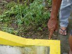 Hendak Bersihkan Sampah, Warga Gresik Temukan Bayi Perempuan Dibungkus Plastik Merah