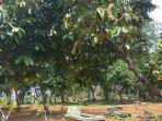 lokasi-pohon-tumbuh-rambut_20180227_164543.jpg