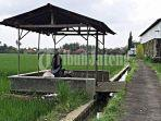 Viral Video Seorang Pria & Wanita Diduga Berbuat Asusila di Gubuk Pinggir Sawah, Diteriaki Warga
