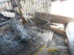 Dua Ekor Kucing Peliharaan Ikut Jadi Korban Kebakaran di Matraman