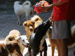 melihat-shelter-anjing-saat-pandemi-covid-19_20200604_230316.jpg