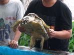 Melihat Taman Biota Laut Pulau Harapan