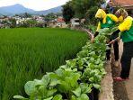menanam-sayuran-di-pinggir-jalan-di-kelurahan-pasanggrahan_20210117_155523.jpg