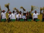 menteri-pertanian-panen-raya-padi-di-sulawesi-tenggara_20151026_090246.jpg