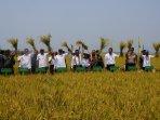 menteri-pertanian-panen-raya-padi-di-sulawesi-tenggara_20151026_090328.jpg