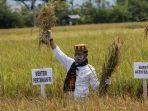 menteri-pertanian-potong-padi-di-aceh-besar_20200930_175645.jpg