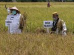 menteri-pertanian-potong-padi-di-aceh-besar_20200930_180220.jpg