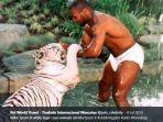 mike-tyson-sedang-bermain-dengan-harimau.jpg