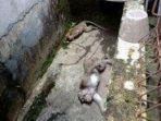 monyet-ekor-panjang-tewas-diracun-orang-yang-tidak-bertanggungjawab.jpg