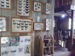 Wisata Edukatif di Taman Kupu-Kupu Gita Persada Bandar Lampung