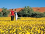 musim-bunga-liar-di-australia_20180717_120622.jpg