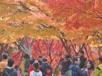 musim-gugur-di-korea-selatan.jpg