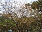 musim-kemarau-pohon-kering_20150717_165414.jpg