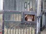 orangutan-selundupan-nih4.jpg