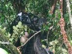 Pajero Sport dan L300 Masuk Jurang setelah Ditabrak Truk, 1 Mobil Pikap Nyangkut