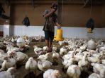 pasar-ayam-lokal-90-persen-dikuasai-asing_20201019_205015.jpg