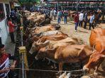 pasar-hewan-sibreh-jelang-hari-raya-qurban_20200722_170801.jpg