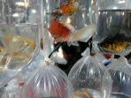 pasar-ikan-hias-parung-ramai-pengunjung_20200727_214000.jpg