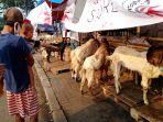 pedagang-hewan-kurban-di-atas-trotoar-jalan_20200728_223803.jpg