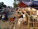 pedagang-hewan-kurban-di-atas-trotoar-jalan_20200728_223805.jpg