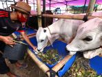 pedagang-hewan-kurban-di-kota-bandung-mulai-bermunculan_20200715_223730.jpg