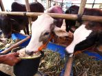 pedagang-hewan-kurban-di-kota-bandung-mulai-bermunculan_20200715_223845.jpg