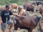 pedagang-hewan-kurban-laris-manis_20210606_201553.jpg