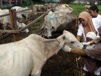 pemeriksaan-hewan-kurban-di-sumatra-utara_20180813_202233.jpg