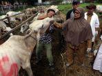pemeriksaan-hewan-kurban-di-sumatra-utara_20180813_202248.jpg