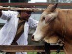 pemeriksaan-hewan-kurban-di-sumatra-utara_20180813_202315.jpg