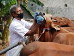 pemeriksaan-hewan-kurban-jelang-idul-adha_20210715_210445.jpg