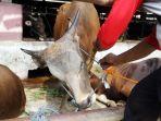 pemeriksaan-kesehatan-hewan-kurban_20200710_162430.jpg