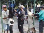 pemotongan-hewan-kurban-di-masjid-al-azhar_20200731_161130.jpg