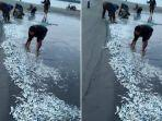 Viral Ribuan Ikan Terdampar di Pantai Sikabaluan Mentawai, BPBD Setempat Ungkap Fakta