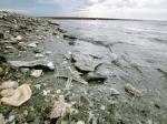 pencemaran-laut.jpg