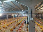 penggunaan-sistem-iot-dalam-peternakan-ayam.jpg