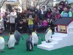 penguin_20150101_20150101_144408.jpg
