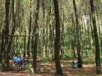 pengunjung-menikmati-keindahan-hutan-pinus-kragilan_20160325_092356.jpg