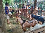 penjual-hewan-kurban-kambing_20200724_152209.jpg