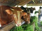 penjual-hewan-kurban-sapi-dan-kambing_20150921_153227.jpg